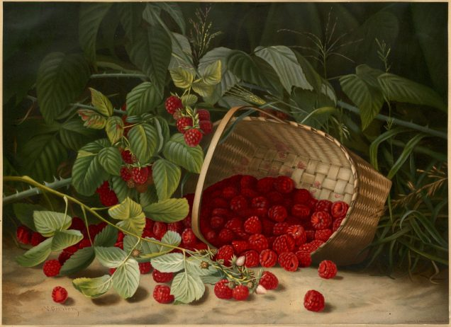 Painting of raspberries spilling from a basket